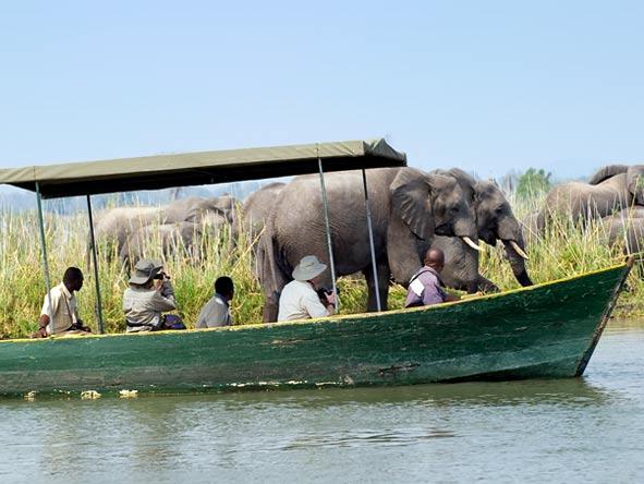Boat safari, elephant views