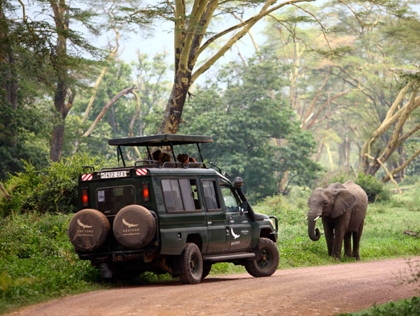 Ngorongoro Crater, Game Drives