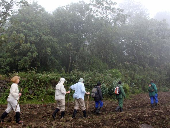 Gorilla trekking in the forests