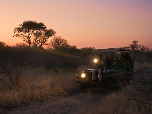 Night Game Drive, Botswana Kalahari