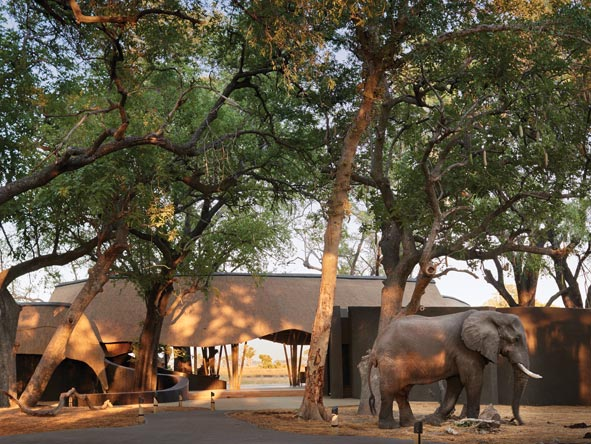 Belmond Eagle island Lodge, Elephant