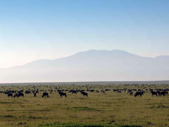 Serengeti Serengeti Kati Kati Camp, wildebeest