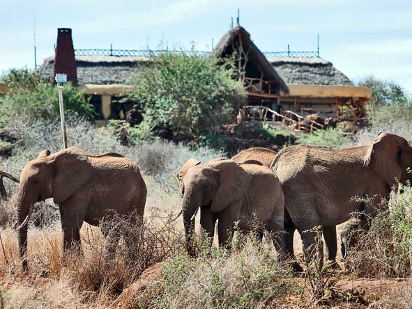 Satao Elerai Camp, elephants