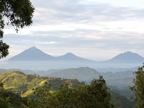 Bwindi's impenetrable forest national park, Uganda