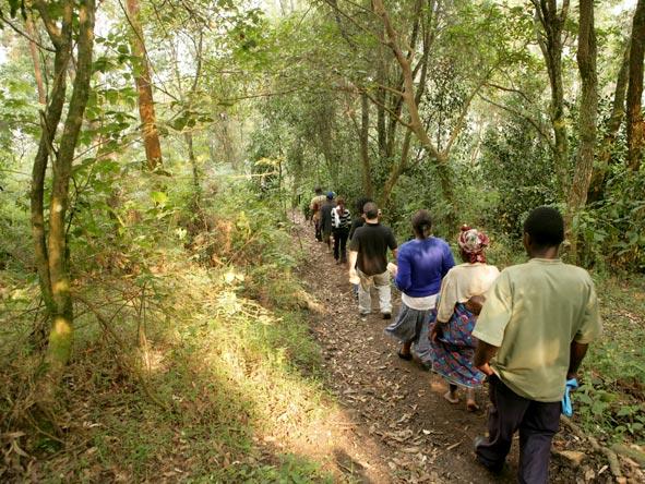 Gorilla Trek, Uganda