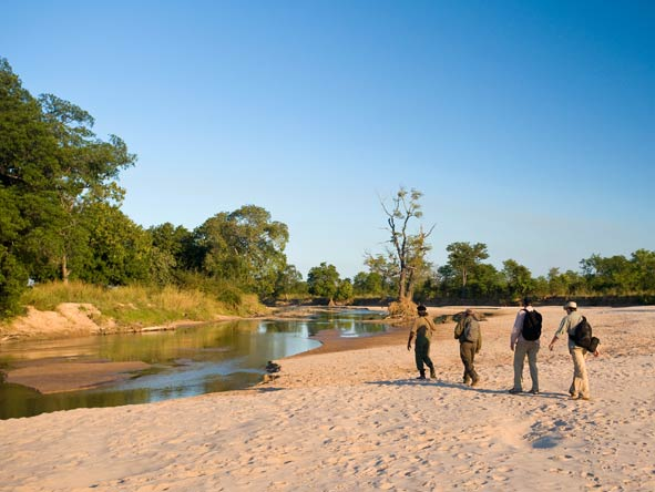 Zambia walking safaris