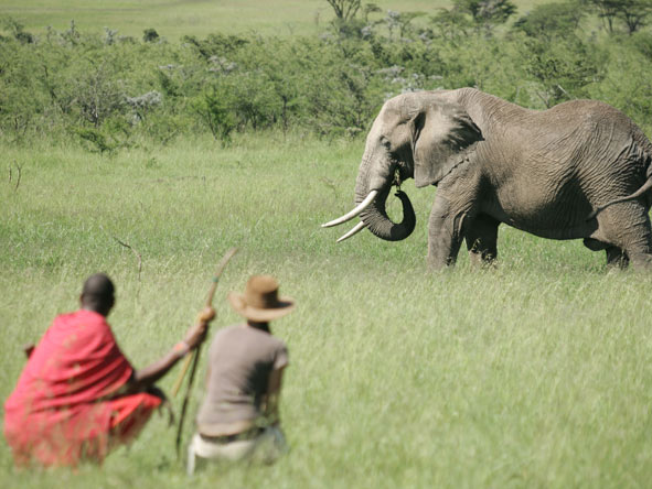 Elephant encounter on a walking safari