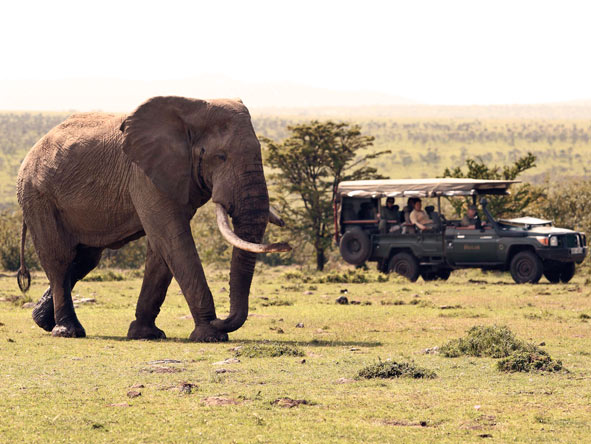 Elephant with a safari vehicle in the background