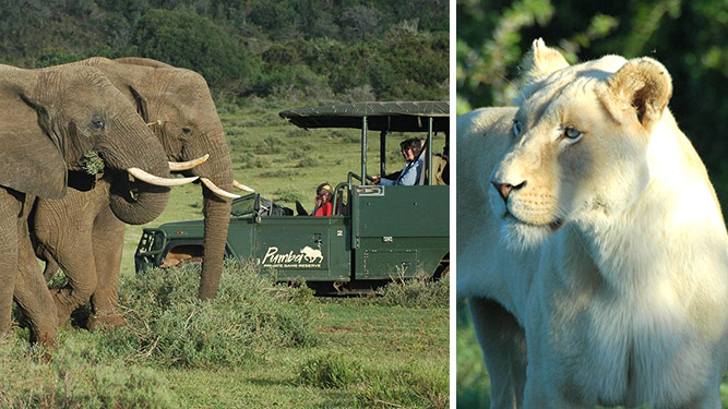 A Guide to Your First South African Safari