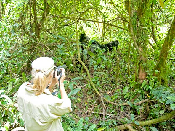 Observing gorilla's in the forest
