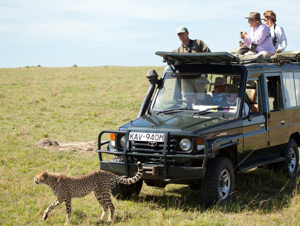 Cheetah spotting on Game Drives in the Masai Mara