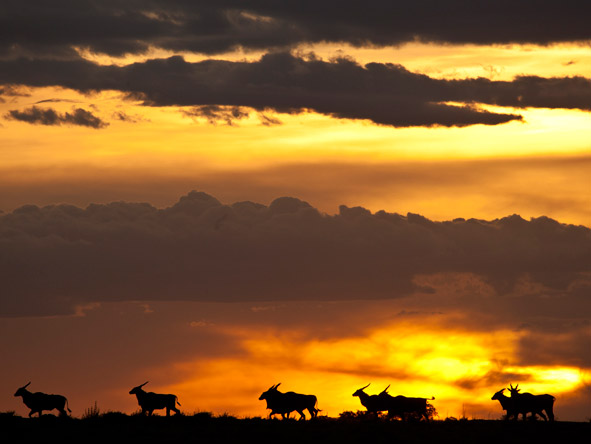 sunset over the masai mara