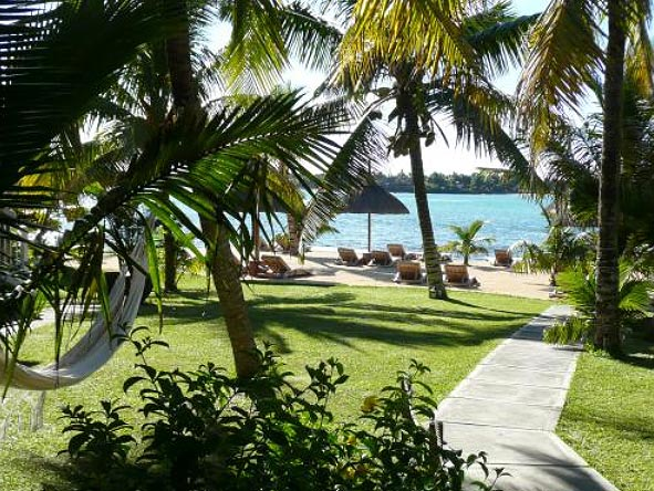 Palmtrees on Mauritius Island