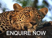 enquire now leopard