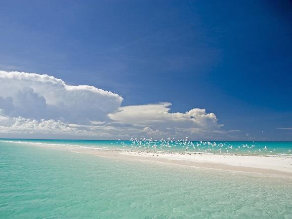 Medjumbe Island shoreline
