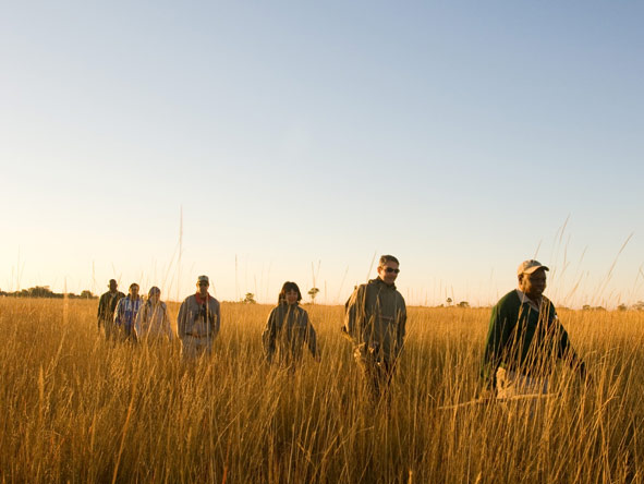 Camp Okavango, walking safari