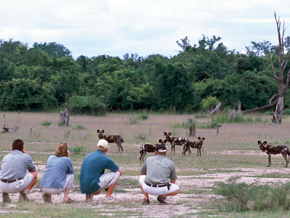 Adventurer South Luangwa Walking Safari
