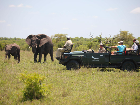 elephant encounters, kruger game drive