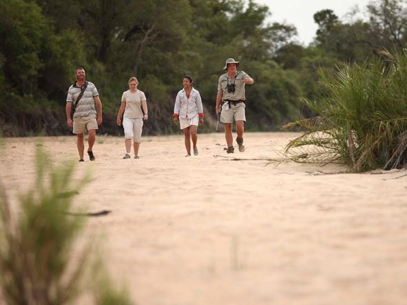 Guided walking safari, timbavati private reserve