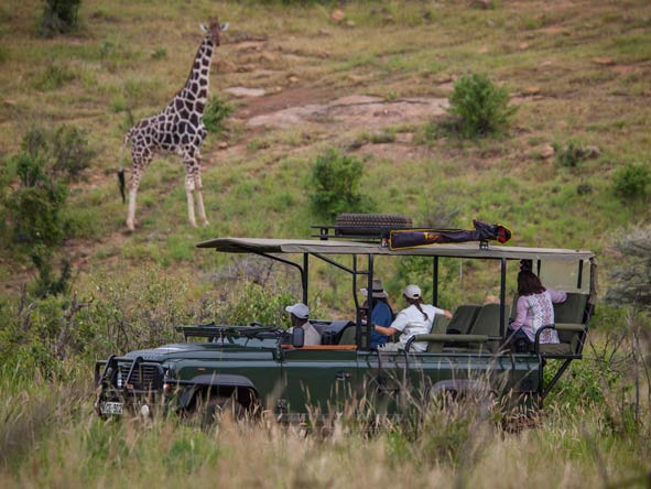 Safari at Loisaba