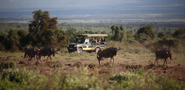 Where to Safari- Safari