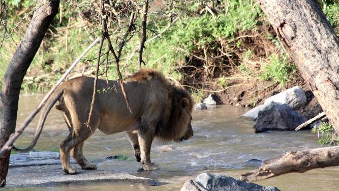 Lion River