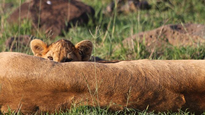 Cub with Mom