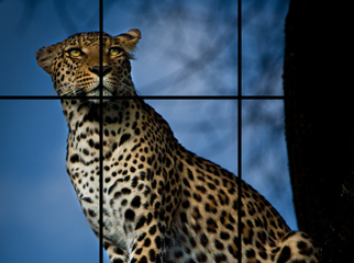 Leopard Grid
