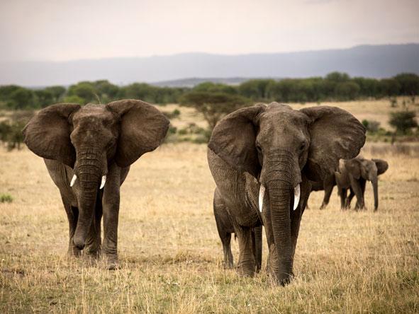 open plains of the Serengeti