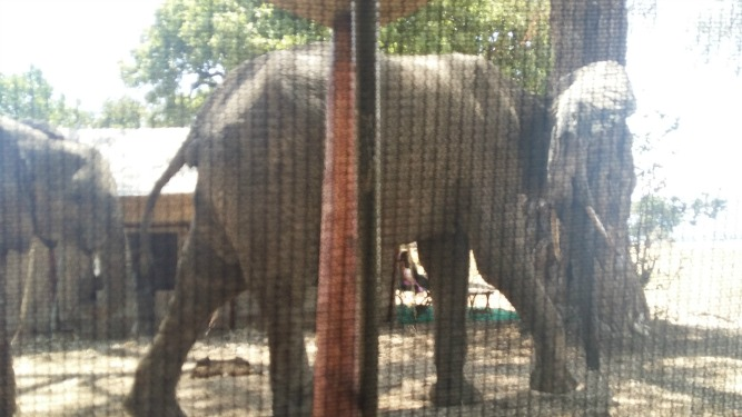Zambezi Expeditions elephants