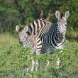 Our Authentic Botswana & Zimbabwe Safari- similar