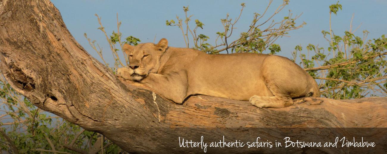 Our Authentic Botswana & Zimbabwe Safari
