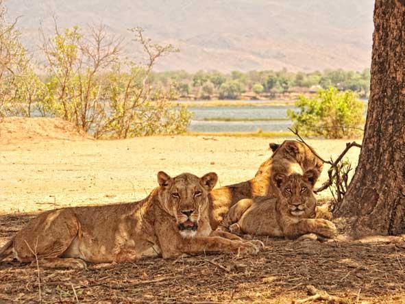Wildlife roams freely