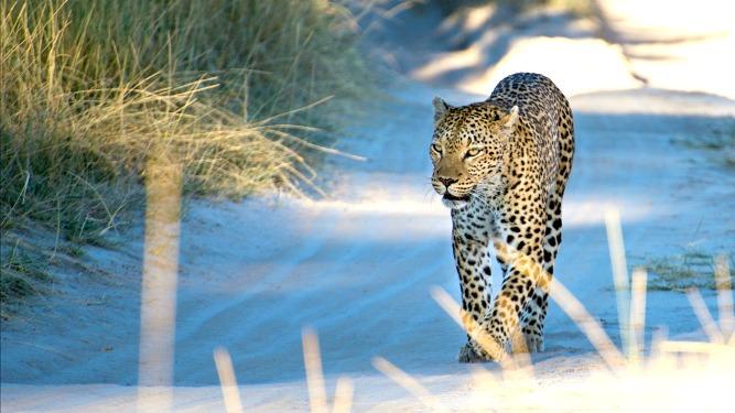 Picture 1- Botswana, Sactuary Stanley's