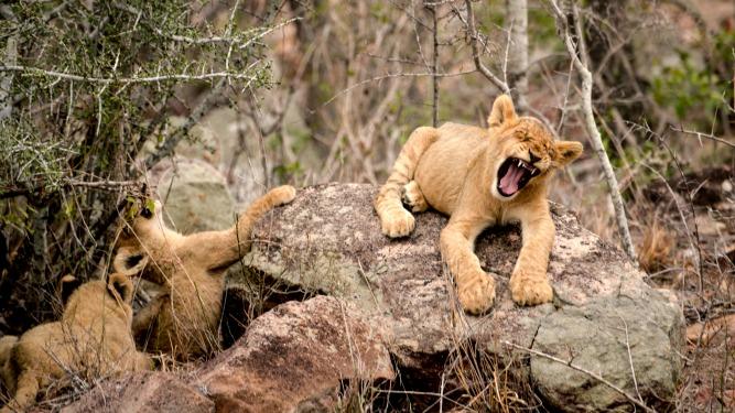 Picture 5- Lion sands river lodge