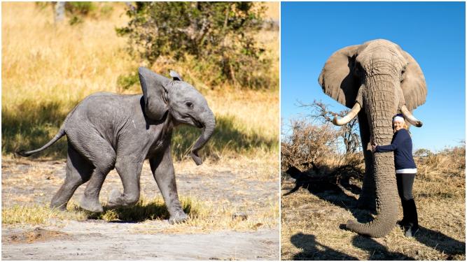 Picture 12- Elephants