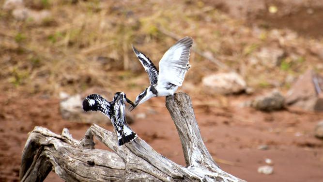 Picture 20- Botswana Chobe