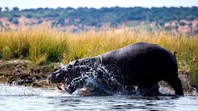 Picture 26- Botswana