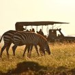 similar - [Infographic]: What to Pack for an African Safari