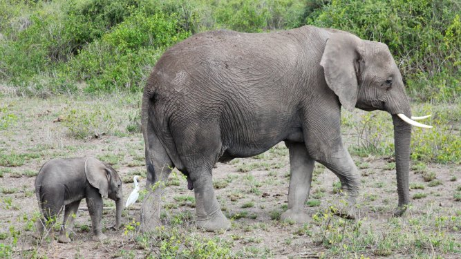 What to expect in Amboseli