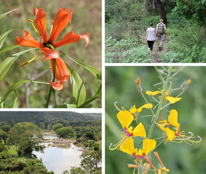 greenery Kruger