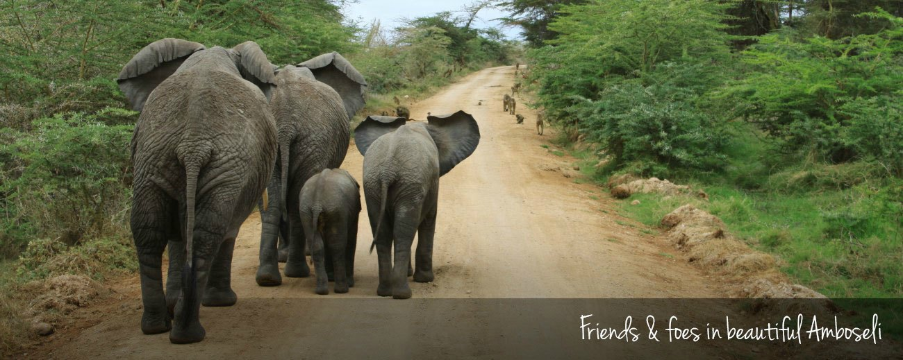 Amboseli National Park: Our best pictures
