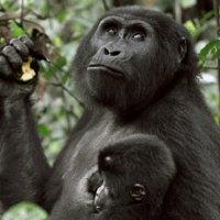 Gorilla Trekking Go2Africa