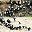 What you will see in the Masai Mara Green Season - similar