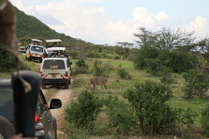 How to choose a safari supplier