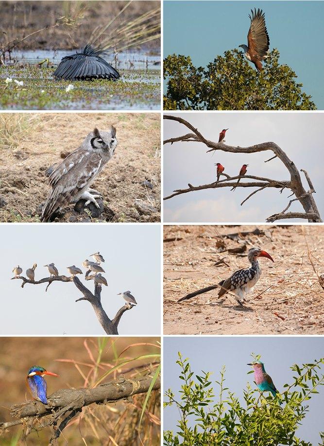 BirdingBotswana