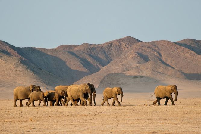 Africa's Most Extraordinary Wildlife Experiences