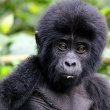 Africa's Most Extraordinary Wildlife Experiences - similar