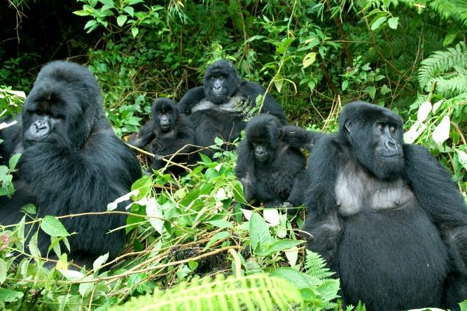 africa's most extraordinary wildlife