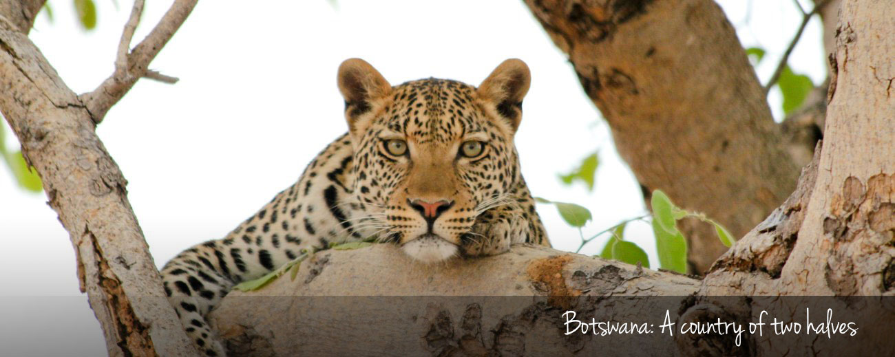 The best things to do in Botswana